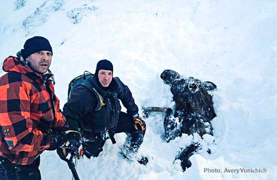 Snowmobilers Rescue Moose