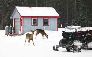 Pine Lodge Hunting Camps